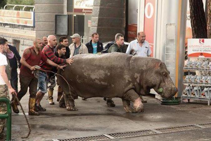 Ярославский зоопарк готов