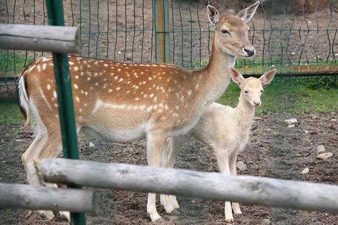 В Ярославском зоопарке у